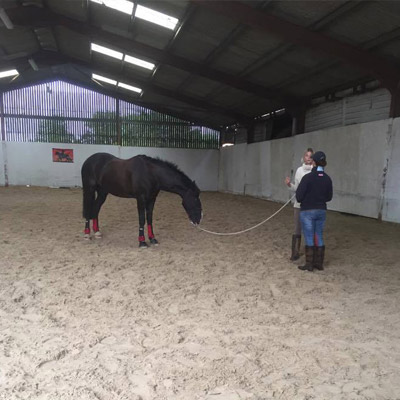 What is Natural Horsemanship and how does it work?