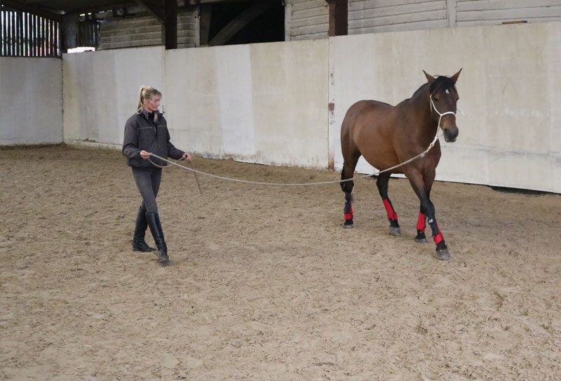 Horse Training & Retraining